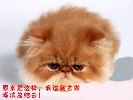 cat000141239.jpg